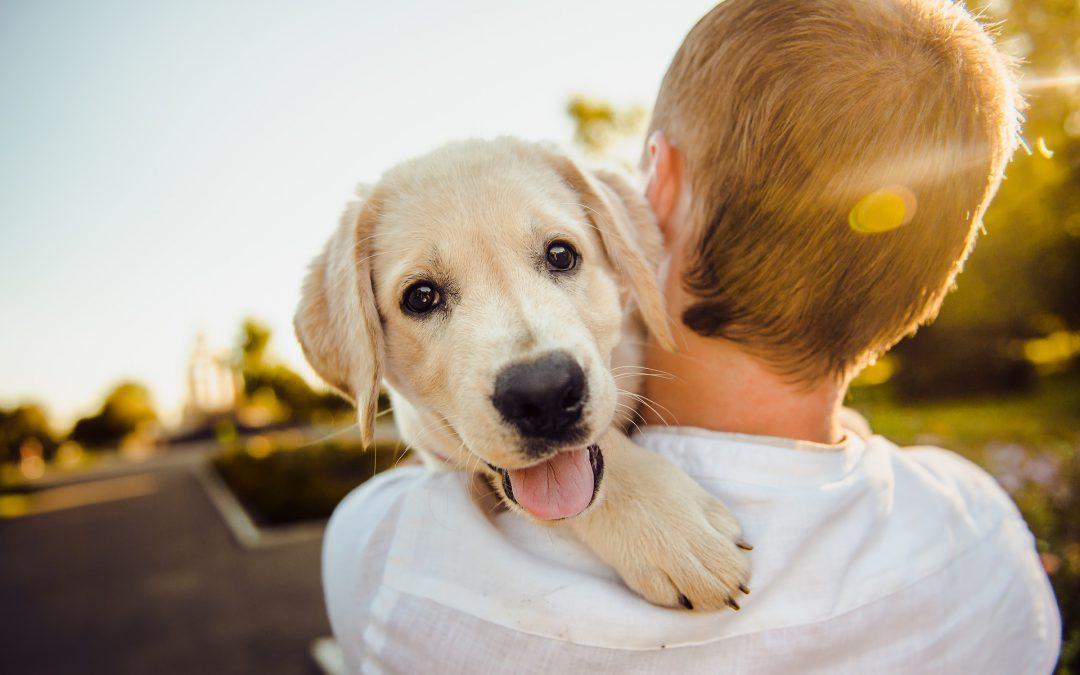 Ubezpieczenie NNW Twojego psa czy kota